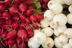 Rábanos y cebollas orgánicos para la venta fotografía de archivo