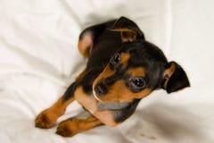 Rápido mi perrito lindo Imagen de archivo