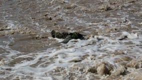 Rápidos de un agua en el vídeo del campo almacen de metraje de vídeo