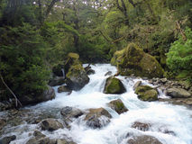 Rápidos del agua blanca en Fiordwood, Nueva Zelanda Foto de archivo