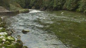 Rápidos del río de Capilano, Vancouver del norte almacen de metraje de vídeo