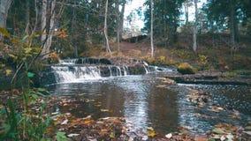 Rápidos hermosos del río del bosque con el bosque del otoño almacen de metraje de vídeo