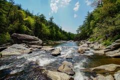 Rápidos pacíficos del río de Linville Foto de archivo
