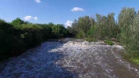 Rápidos y árboles del río de Brown almacen de metraje de vídeo