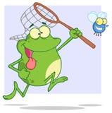 Râ com fome que persegue a mosca com uma rede Foto de Stock Royalty Free