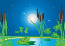 Râ no bulrush na lagoa ilustração royalty free