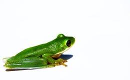 Râ verde Imagens de Stock Royalty Free