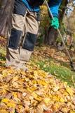 Râtelage des feuilles pendant le temps d'automne Photo libre de droits