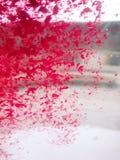 Różany płatek łapiący w wiatrze zdjęcie stock