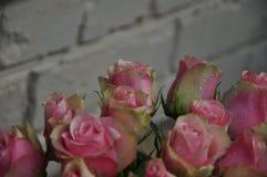 Róże, różowe róże, róże w rosie, świeże róże, wzrastali kwiaty obraz stock
