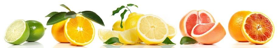 Różnorodna cytrus owoc panorama fotografia stock