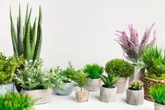 Różnorodne dom rośliny w różnych garnkach przeciw biel ścianie obraz stock