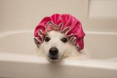 Różowej prysznic nakrętki dzień obrazy stock