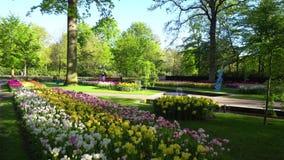 różowi czerwoni tulipany zbiory wideo