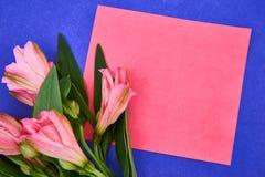różowy kwiat kłaść na menchia papierze w purpurowym tle mieszkanie nieatutowy styl Przestrzeń dla teksta zdjęcie stock