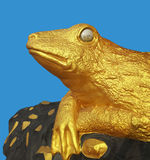 A rã dourada que guarda a medalha de ouro Imagens de Stock Royalty Free