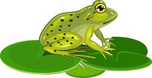 Rã verde Foto de Stock Royalty Free
