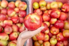 Ręka kobieta chwyt czerwony świeży jabłko i jabłko w tle fotografia royalty free