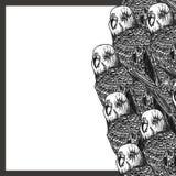Ręka rysująca rama z papugami fotografia stock