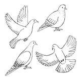 Ręki rysować gołąbki Wektorowa nakreślenie ilustracja royalty ilustracja