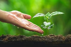 Räcka att plantera trädet för trädomsorgkaffe i den naturliga bakgrunden royaltyfria bilder
