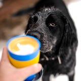 Räcka att rymma en kopp av den varma drinken nära hund Arkivbild