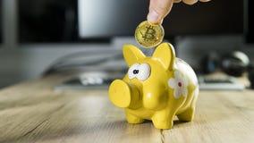 Räcka att sätta guld- bitcoin in till spargrissparbössan med en dator på bakgrund Cryptocurrency investeringbegrepp Arkivfoto