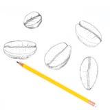 Räcka attraktionkaffebönan på vit bakgrund med blyertspennan Royaltyfri Foto