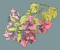 Räcka den dra blomman Arkivbild