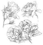 Räcka den dra blomman Royaltyfri Bild
