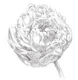 Räcka den dra blomman Fotografering för Bildbyråer