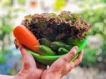 Räcka den hållande salladkorgen med naturbakgrund, vegetarian, moroten, gurkan och grönsallat för röd korall, husmanskost, det su royaltyfri fotografi