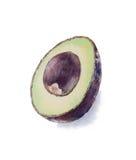 Räcka den målade vattenfärgavokadot, haasavokadot, skivad avokado Royaltyfri Bild