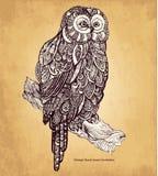 Dekorativ owl Arkivfoton