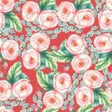Räcka den utdragna vattenfärgen den blom- sömlösa modellen med mjuka rosa rosor in på den röda bakgrunden Arkivfoton
