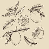 Räcka den utdragna vektorillustrationen - samlingar av citroner stock illustrationer