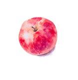 Räcka det målade vattenfärgäpplet, det röda äpplet, helt äpple Royaltyfri Foto