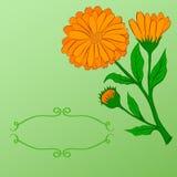 Räcka-dra blom- bakgrund royaltyfri illustrationer
