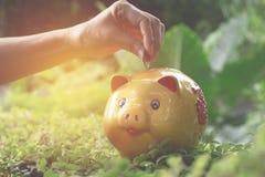 Räcka droppe myntet in i spargrisen för sparande pengar och framgång, Royaltyfri Foto