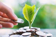 Räcka sparande av ett mynt till växten som växer från högar av pengar på blurr Fotografering för Bildbyråer