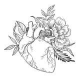 Räcka utdragna vektorillustrationer - mänsklig hjärta med blommor royaltyfri illustrationer