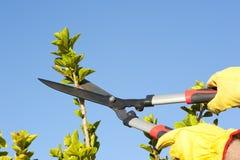 För treesky för trädgårds- arbete beskära bakgrund Royaltyfri Bild