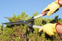 För häcksky för trädgårds- arbete beskära bakgrund Arkivfoton