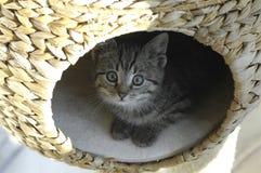 rädd kattunge fotografering för bildbyråer