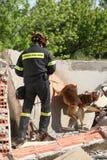 Räddare med hunden, under en utbildningsövning Royaltyfria Bilder