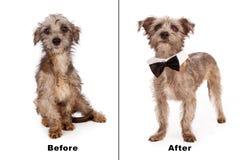 Räddningsaktionhund före och efter royaltyfria foton
