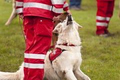Räddningsaktionhundskvadron Royaltyfria Foton