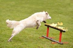 Räddningsaktionhundskvadron Royaltyfri Foto