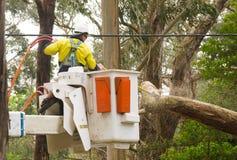 Räddningstjänster som klipper till och med ett träd i Stirling, södra Australien arkivfoton