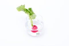 Rädisa i ett exponeringsglas av vatten fotografering för bildbyråer